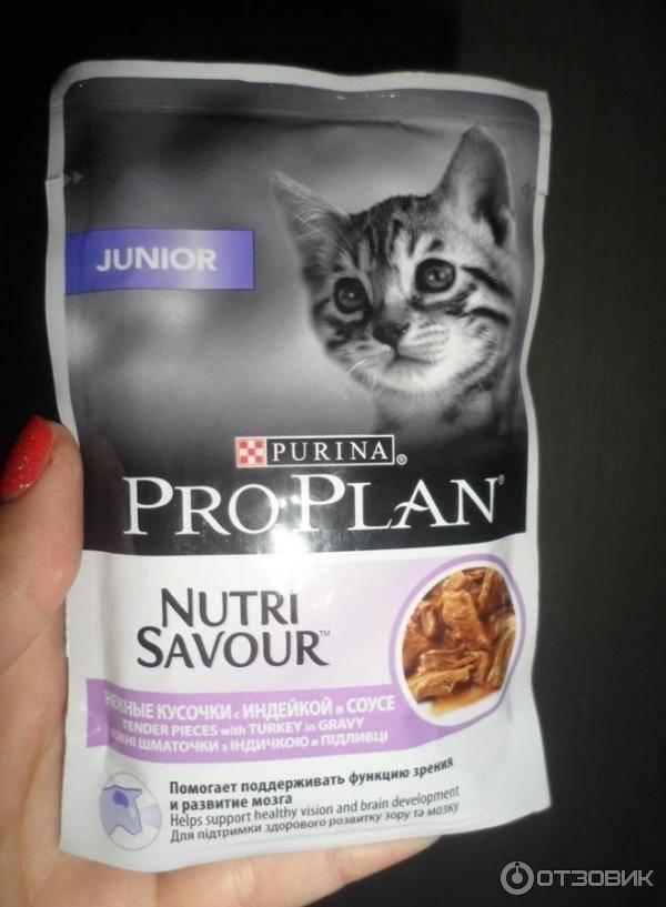 Слабительное для кошек - что можно дать животному в домашних условиях при запоре