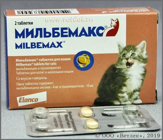 Мильбемакс таблетки для собак: инструкция по применению, отзывы, аналоги