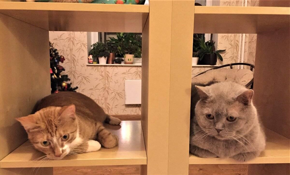 Какого котенка лучше брать: полная инструкция