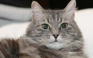 Какие прививки нужны котятам, когда делают первую вакцинацию от бешенства?