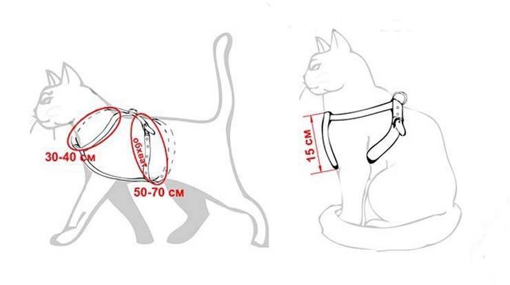 Шлейка для кошки: как выбрать и надеть, сделать своими руками, видео