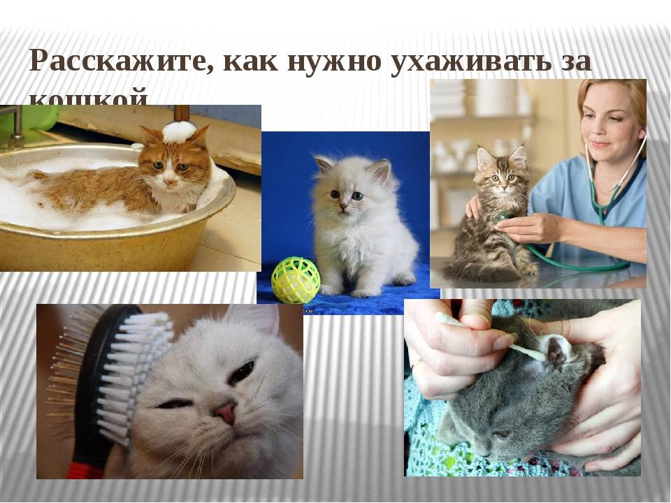 Кого лучше взять в квартиру — кота или кошку: советы по выбору