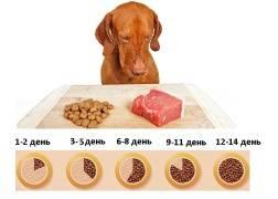 Как перевести кошку на сухой корм с других видов питания