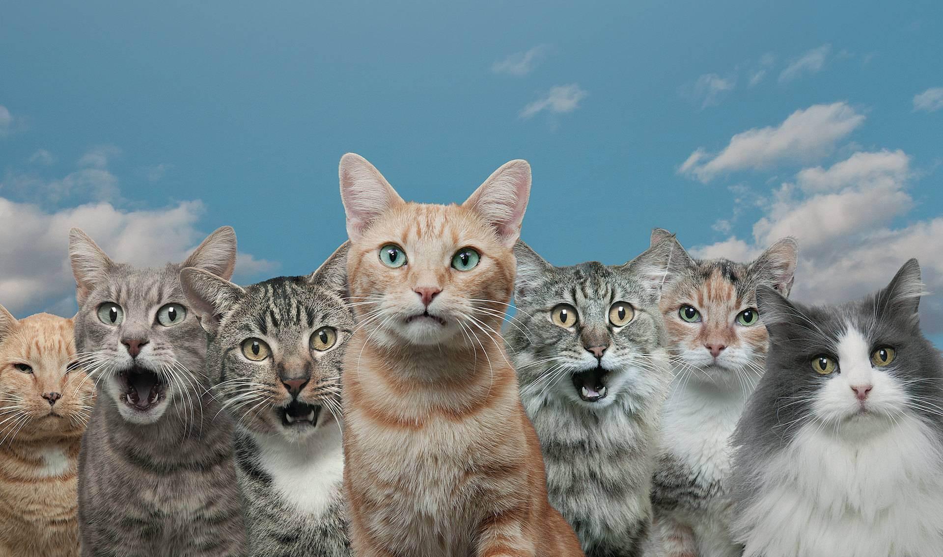 Кошки научились мяукать для общения с людьми. тонкости языка кошек
