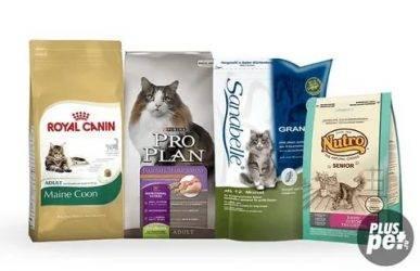 Чем кормить мейн куна: каким кормом, питание котят и взрослых