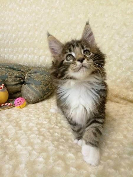 Кошка или собака, кого лучше выбрать фрилансеру? | kadrof.ru