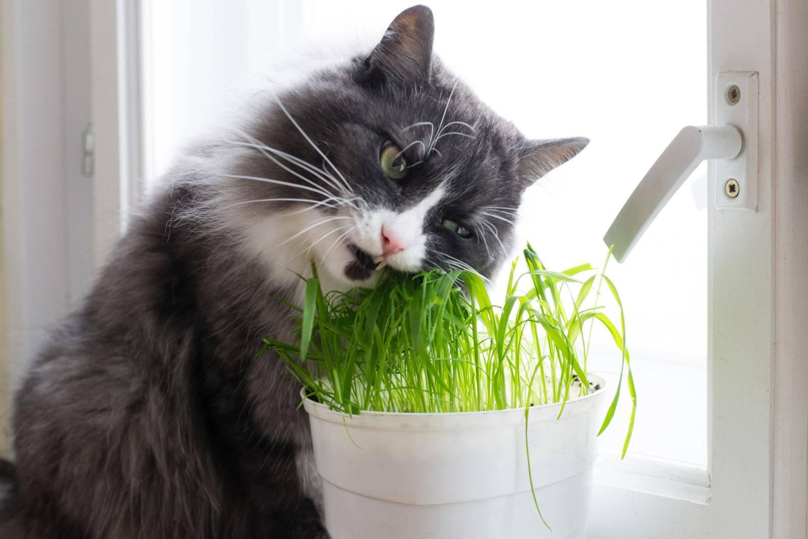 Почему кошки закапывают еду, что это значит, как отучить загребать миску с кормом