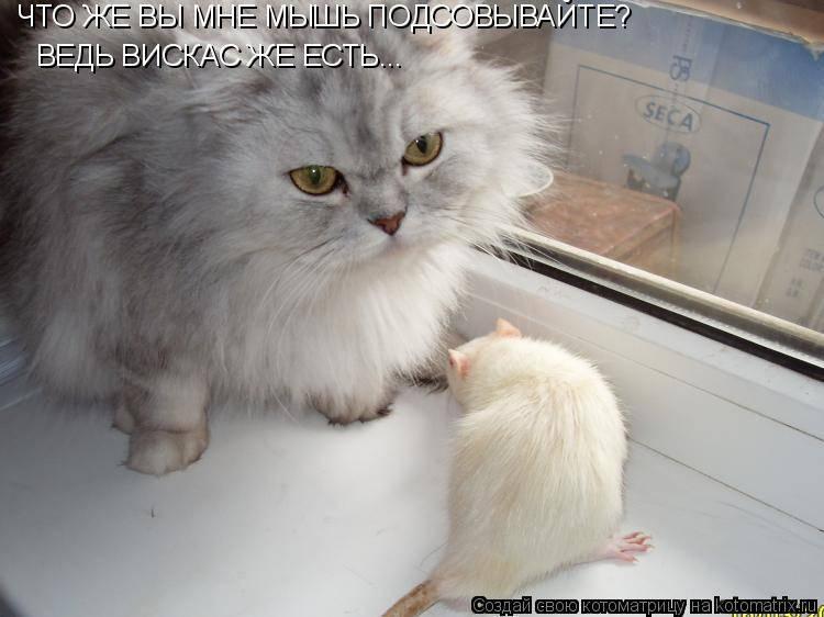 Кошка съела отравленную мышь симптомы и лечение - муркин дом