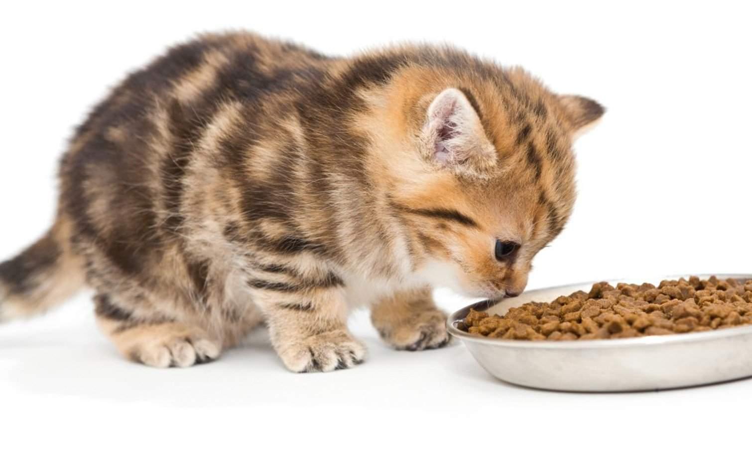 Как ухаживать за котенком: правила, советы и рекомендации