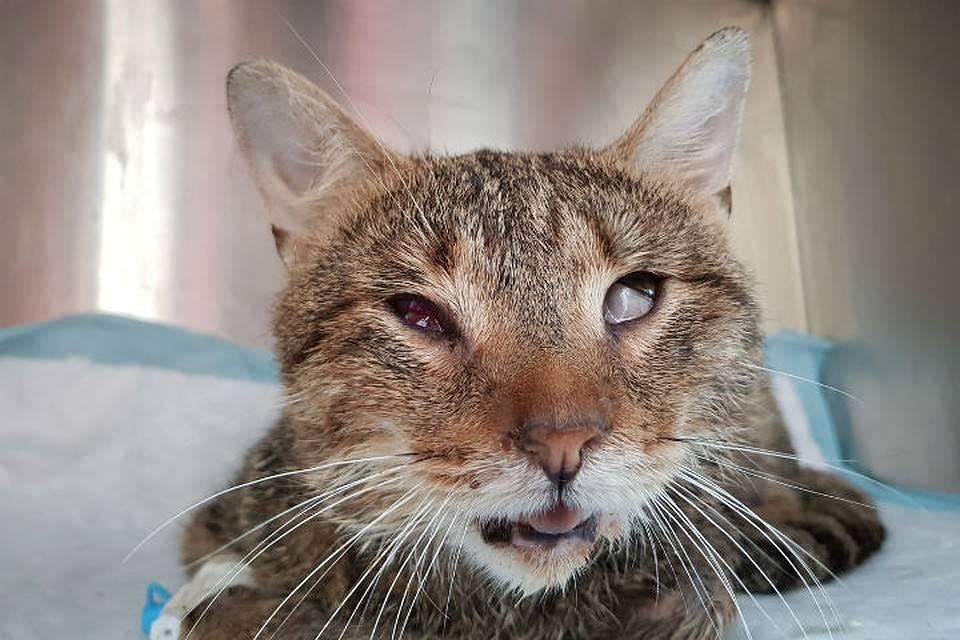 Кошка хрипит, слышны хрипы - симптомы, лечение, препараты, причины появления | наши лучшие друзья