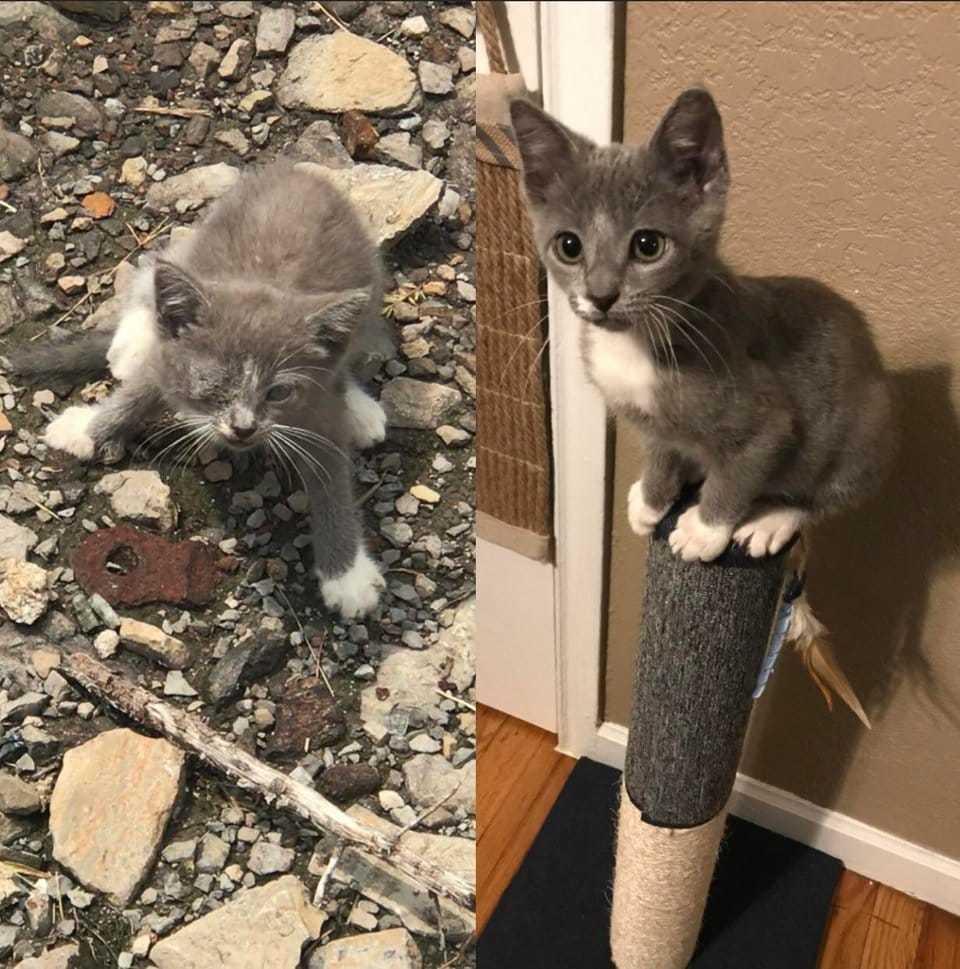 Что делать, если нашел котенка наулице. инструкция ссоветами волонтеров