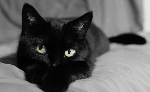 Имя черно белому котенку. имена и клички для черных котов