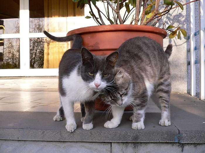 Когда можно вязать кошку после родов, чтобы не навредить здоровью