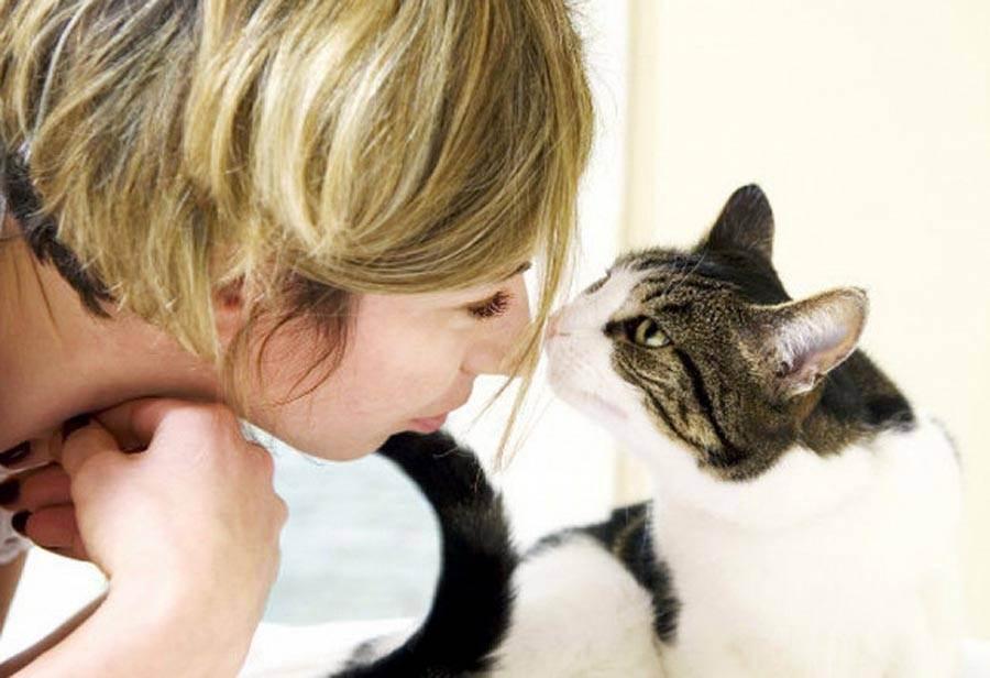 Зависимость от кошек название болезни - муркин дом