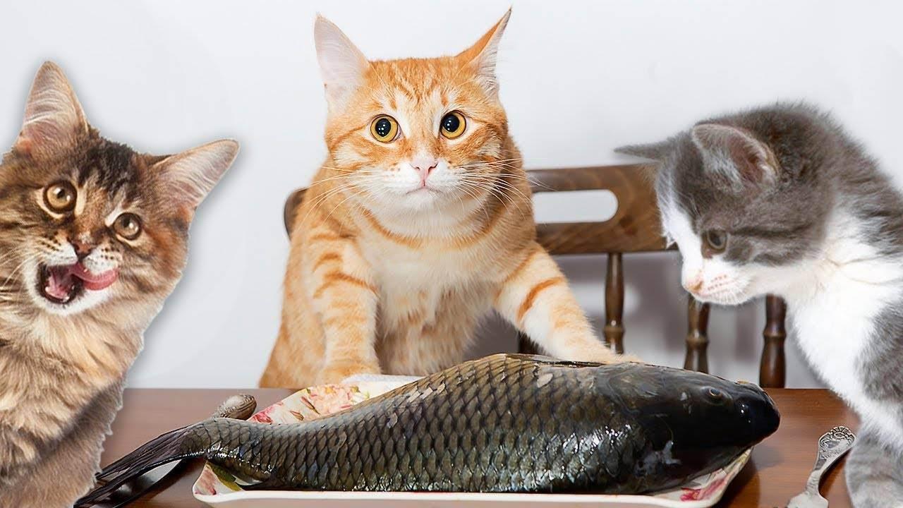 Как кормить кошку. - запись пользователя екатерина (ket_star) в сообществе домашние животные в категории кошки. болезни, прививки, советы по уходу - babyblog.ru