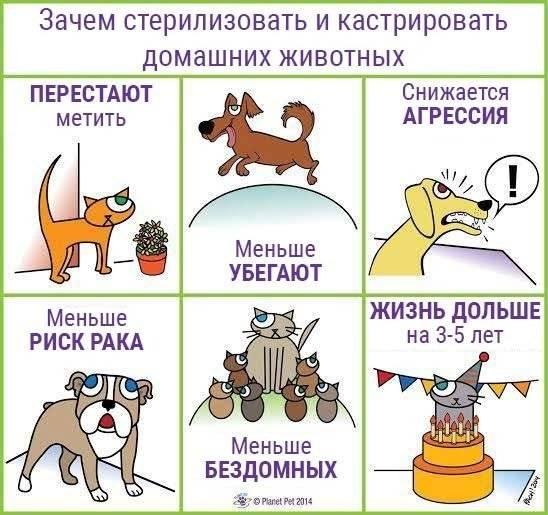 7 причин, почему кастрированный кот метит
