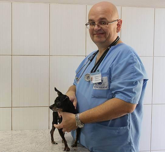 Как проходит консультация ветеринара?