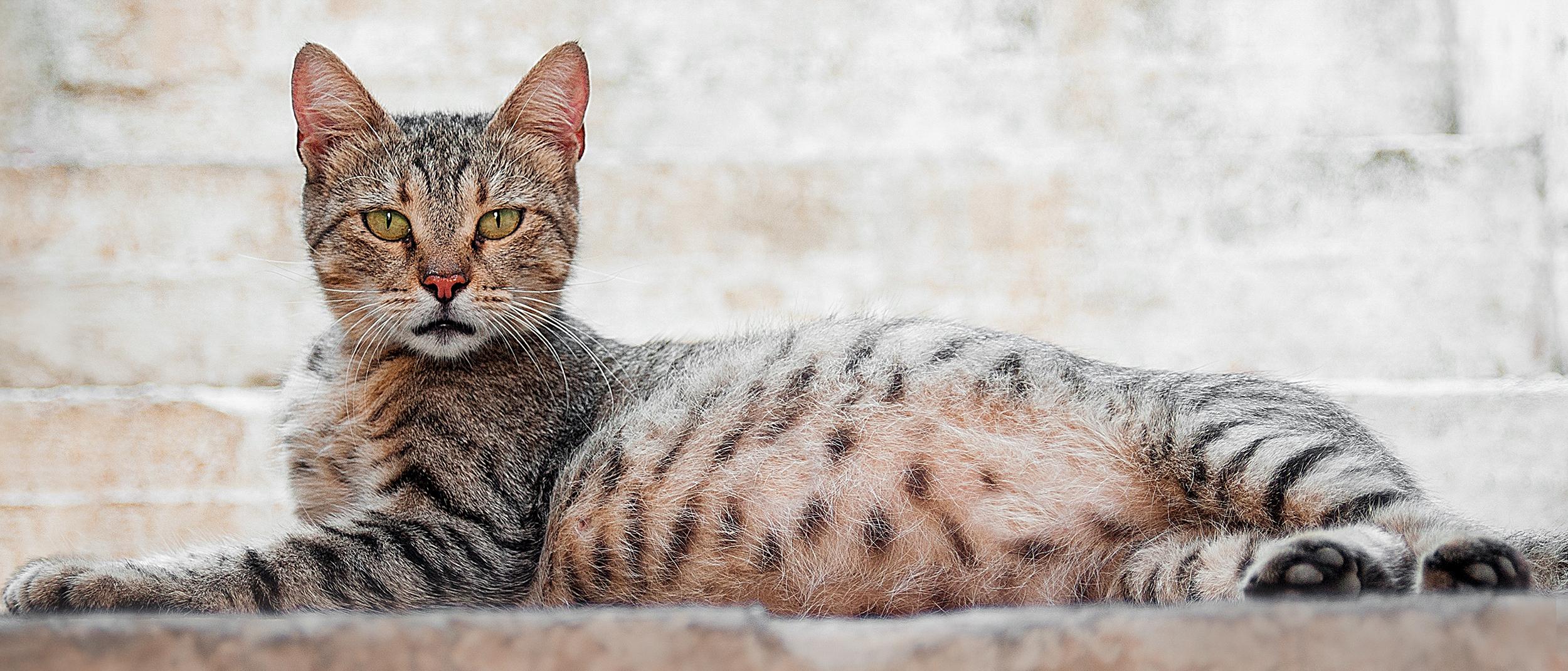 Как помочь кошке при родах на дому