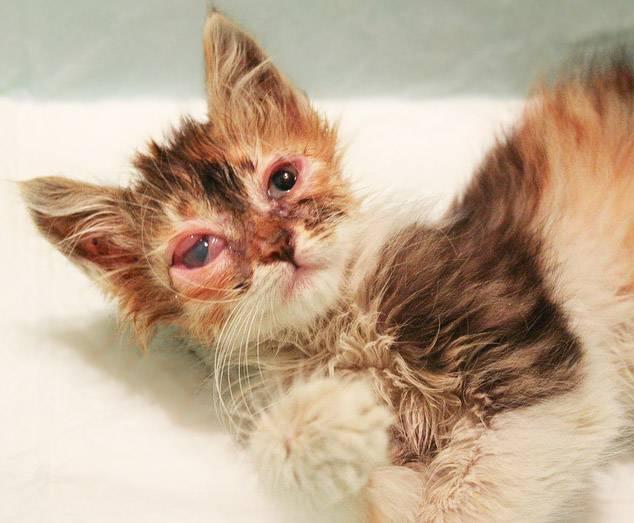 Сальмонеллез – тяжелое заболевание котят и молодых кошек. симптомы сальмонеллеза у кошек и способы лечения