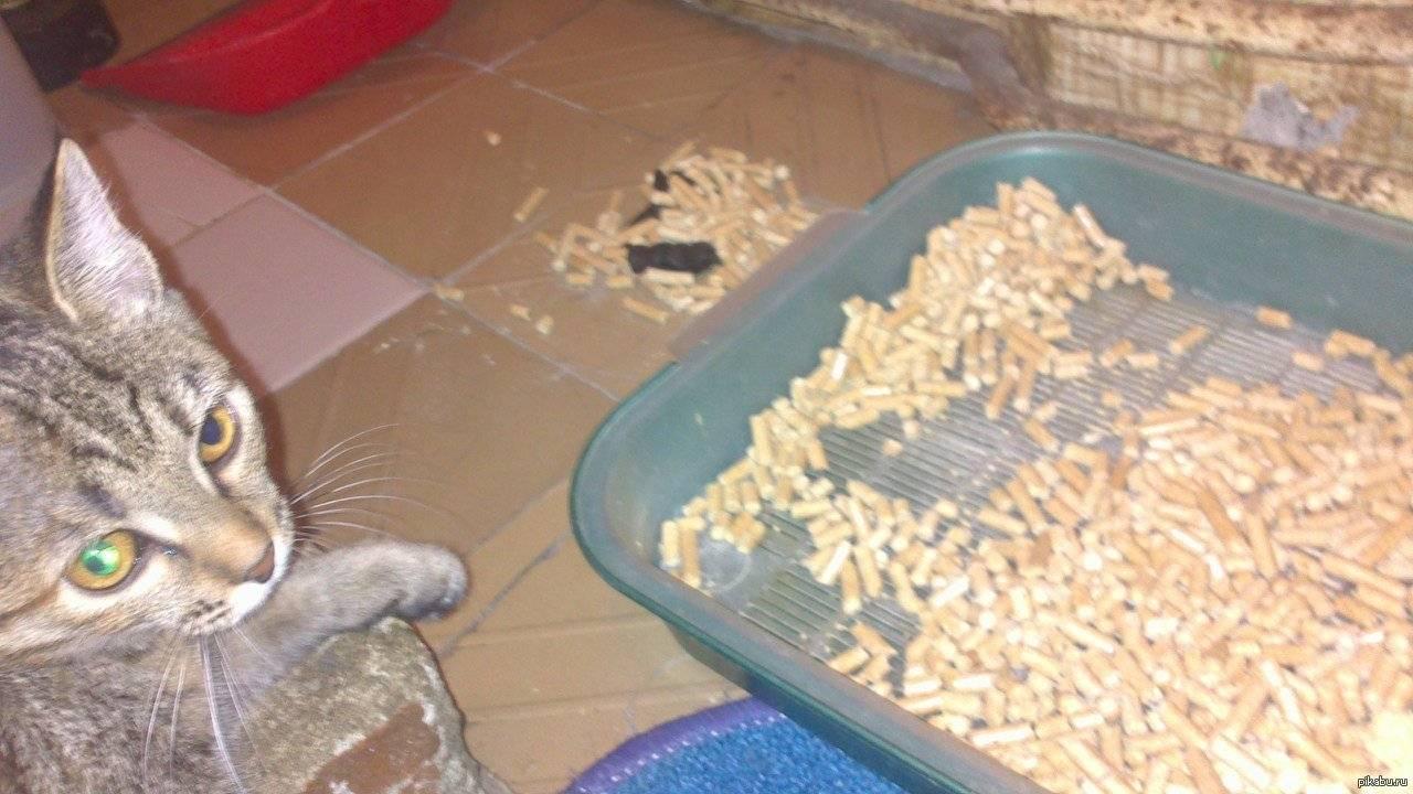Как отучить кошку гадить в неположенном месте: обзор причин и популярных методов