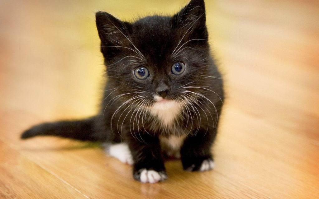 Почему котенок не может покакать – 4 причины запора у малыша