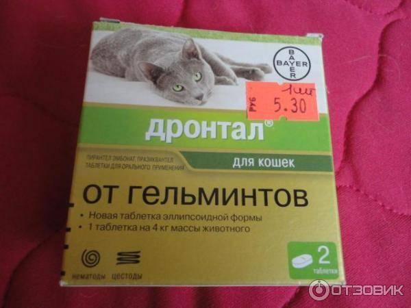 Как дать коту таблетку от глистов: основные правила и способы