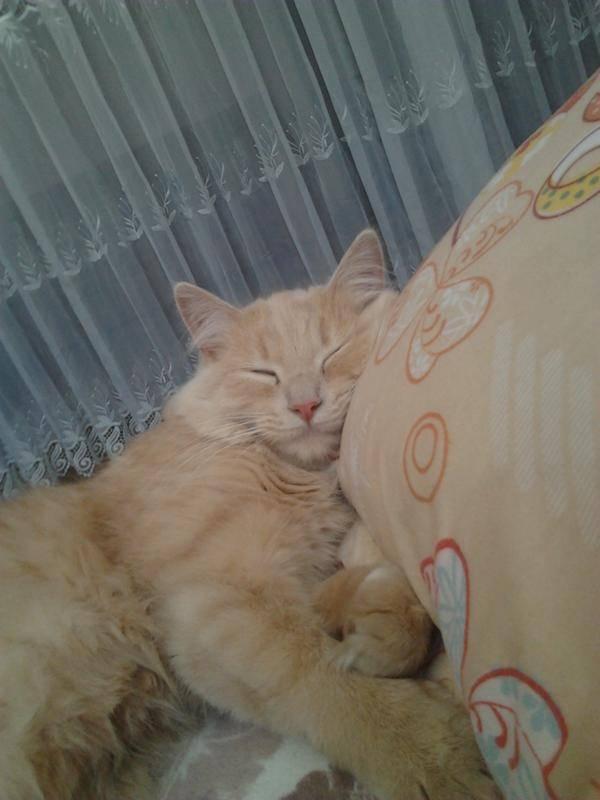 Кошка постоянно лижется: причины такого поведения, что делать?