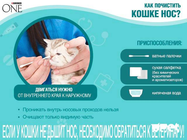 Как промыть нос коту в домашних условиях: применяемые средства, правила чистки