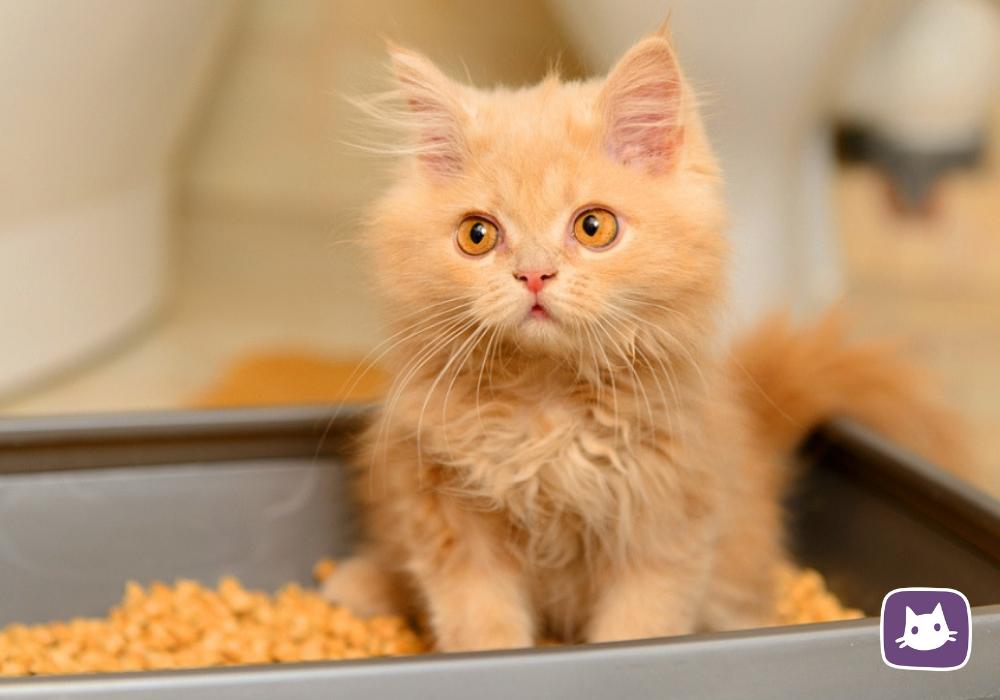 Бентонитовый наполнитель для кошачьего туалета: лучший состав для кошек на основе комкующейся глины. что делать, если котята едят белый бентонит?
