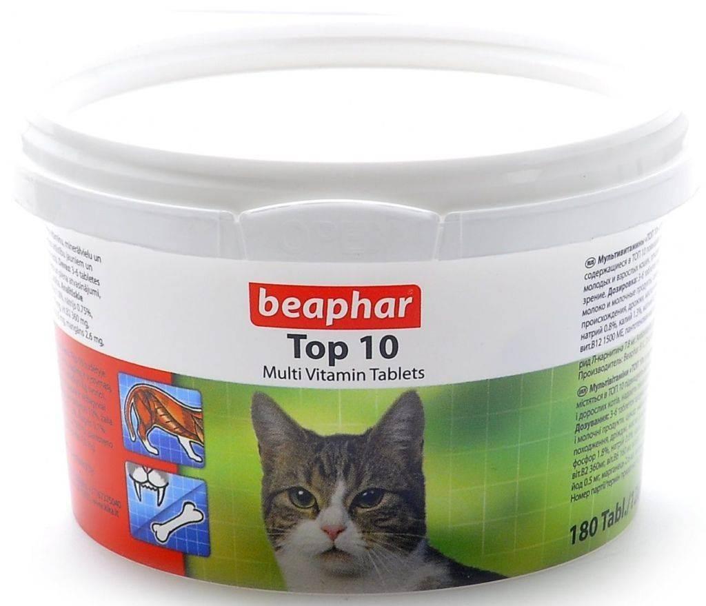 Котенок ест наполнитель для лотка — опасно ли это. опасен ли комкующийся наполнитель для котят