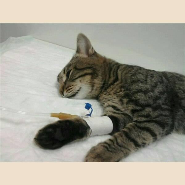 Перелом у кошки. виды переломов: как оказать помощь