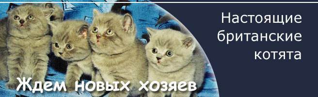 Что необходимо купить к приезду котенка в новом доме