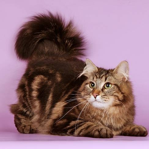 Пукают ли кошки: почему образовываются газы, что делать