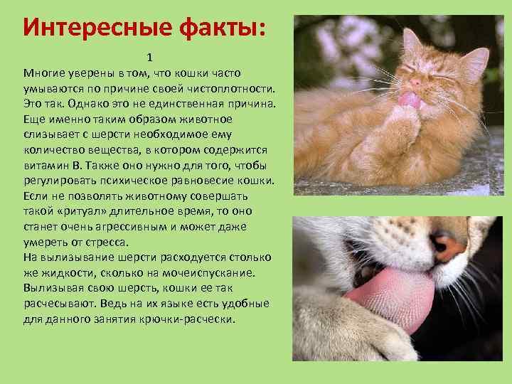 Интересные факты о кошках, о которых вы не знали