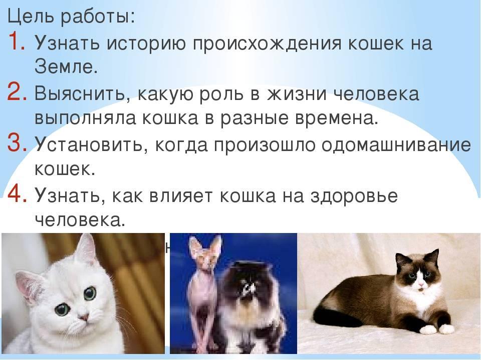 Откуда появились кошки на планете?