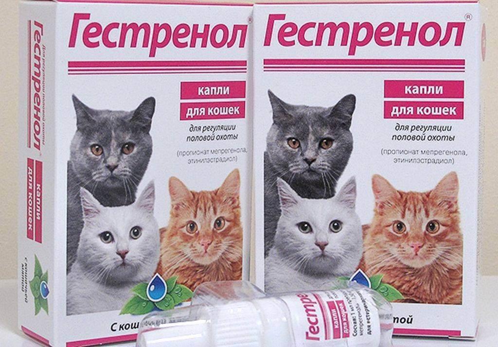 Капли, таблетки и другие средства для кошек во время течки
