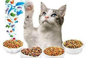 Какие сухие кошачьи корма самые лучшие?