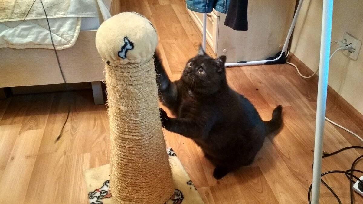 Кот дерёт обои, кошка царапает мебель – что делать?