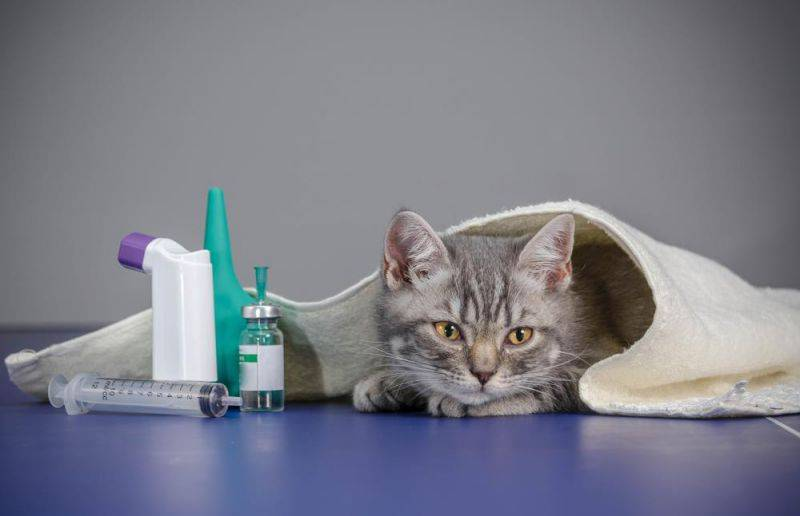 Как помочь кошке при отравлении: первая помощь и лечение недуга