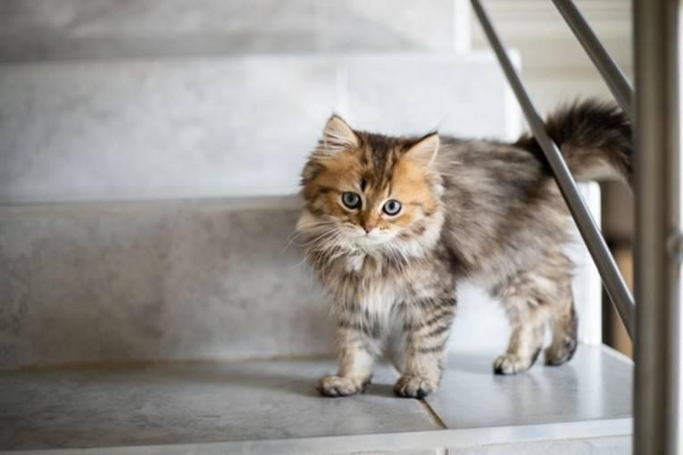 Чем следует кормить кота в домашних условиях: секреты правильного питания кошек