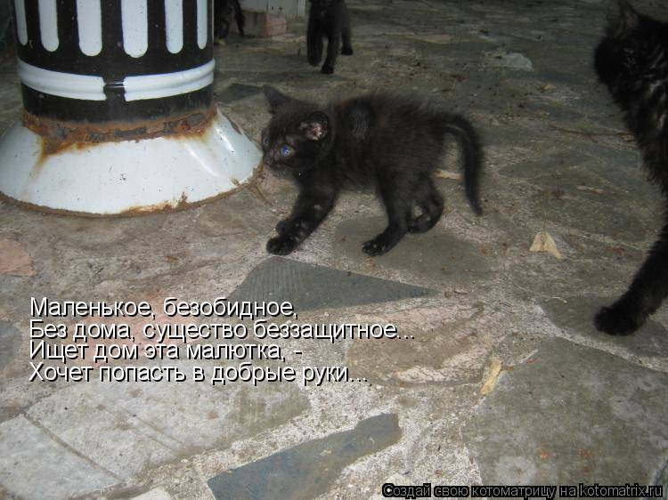 Чёрный кот в доме – хорошие и плохие приметы и суеверия