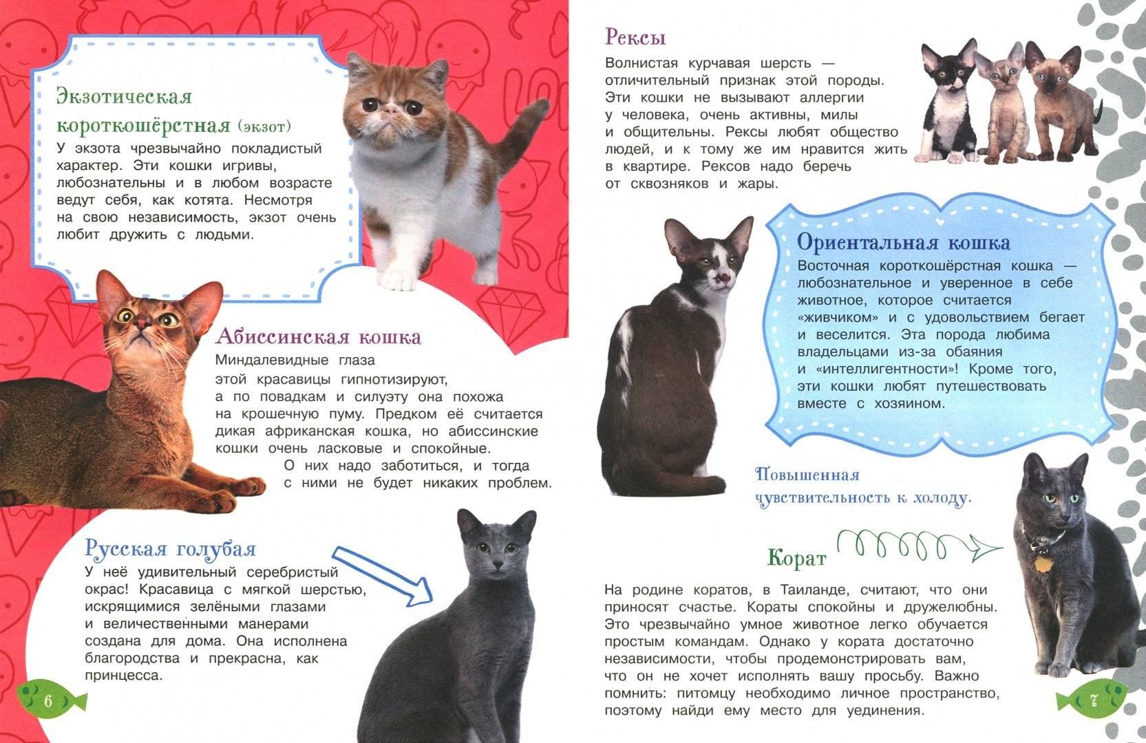 Правильное воспитание котенка или как воспитать умного кота — выкладываем во всех подробностях