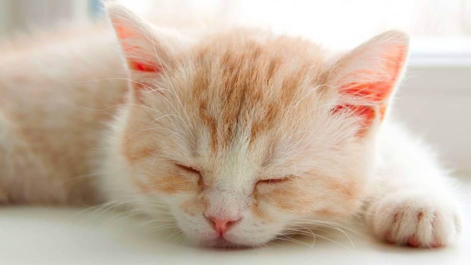 Как узнать что кот заболел, как понять что болит у кошки?