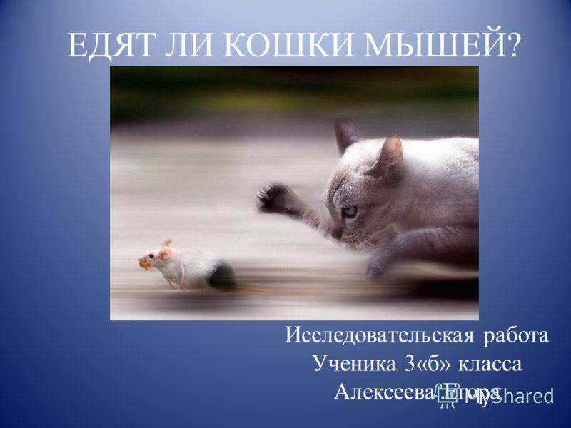 Кот-крысолов: кто лучше всего ловит крыс и мышей