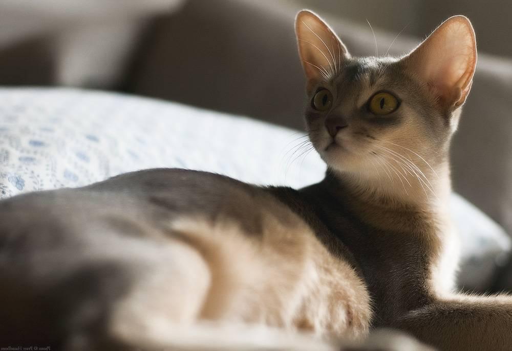 Как проходит беременность у кошки по неделям