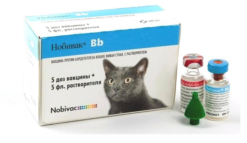 Прививки кошкам, график вакцинации котят и взрослых кошек