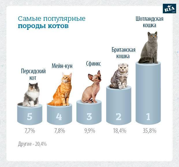 Сколько видов кошек существует в мире? - zhivomag