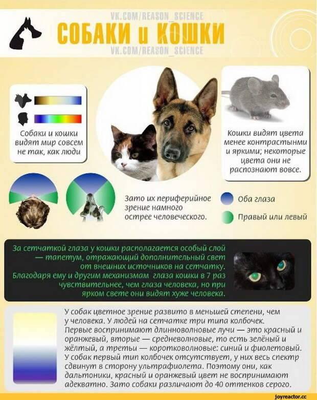 Особенности кошачьего зрения, и как видят кошки окружающий мир