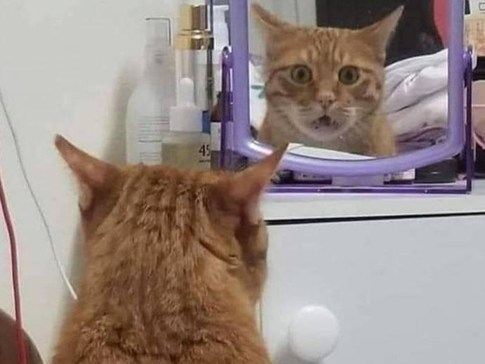 Видят ли себя в зеркале коты — познаем со всех сторон