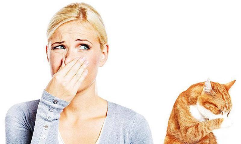 Почему у кота воняет изо рта: причины неприятного запаха и лечение